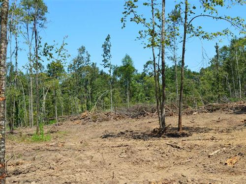 3 Acre Lot Near Braxton, MS For sa : Braxton : Simpson County : Mississippi
