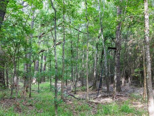 4.27 Acre Building Site National : Mena : Polk County : Arkansas