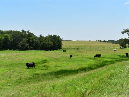 12.88 Acres In Tx, Owner Financing : Coupland : Williamson County : Texas