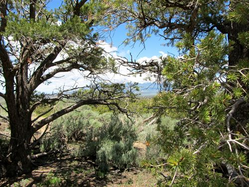 Mature Trees, Rolling Hills, 245/Mo : Fort Garland : Costilla County : Colorado