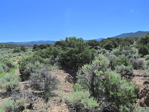 Trees And Grassy Meadows, $199/Mo : Fort Garland : Costilla County : Colorado