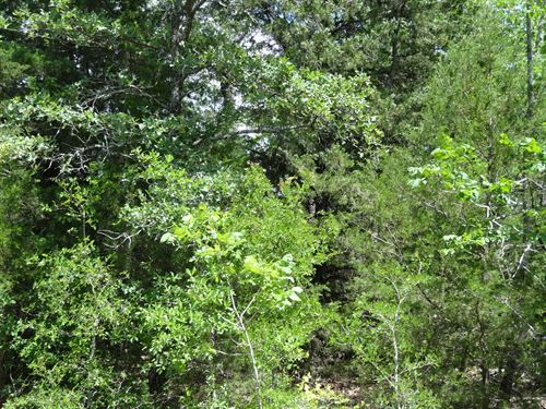 10 Acres In TX With Many Trees : Eustace : Henderson County : Texas