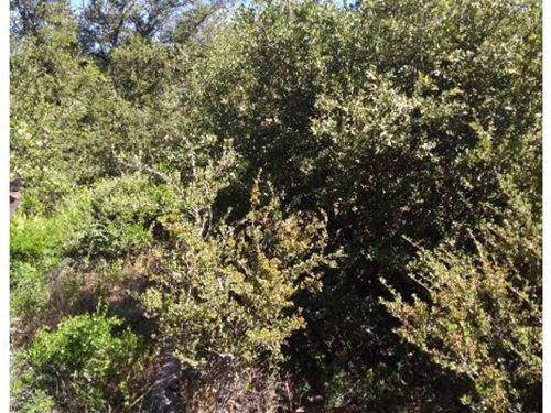 Property Near Lake Cuyamaca, Ca : Julian : San Diego County : California