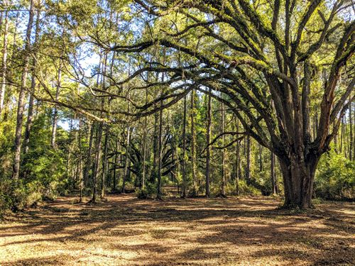 Perfect New Homesite And Hunting : Monticello : Jefferson County : Florida