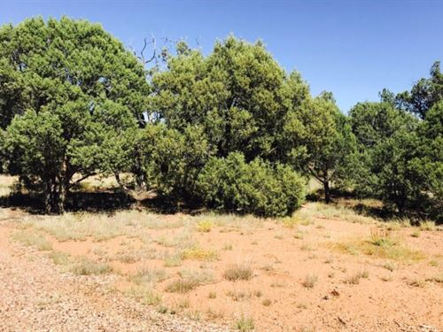 Existing Structure And Backs : Show Low : Navajo County : Arizona