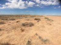 Land Near Petrified Forest Park, Az : Holbrook : Navajo County : Arizona