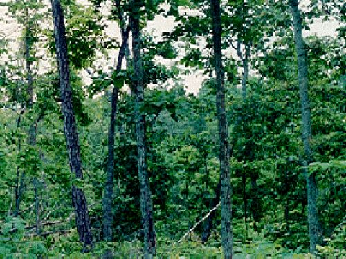 12 Wooded TN Acre Tennessee River : Bath Springs : Decatur County : Tennessee