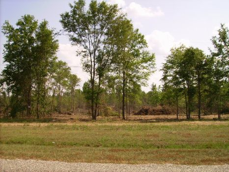 Homesites With Creek Frontage : Reynolds : Taylor County : Georgia