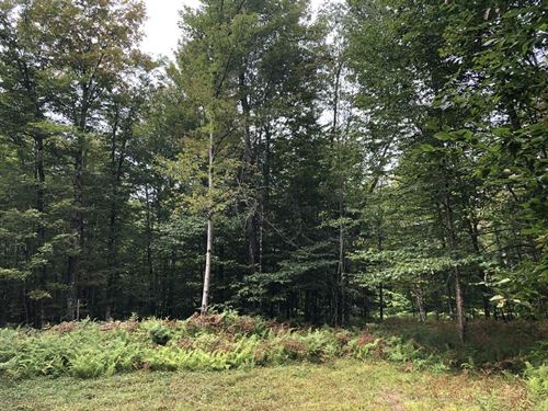 Near Old Forge : Remsen : Oneida County : New York