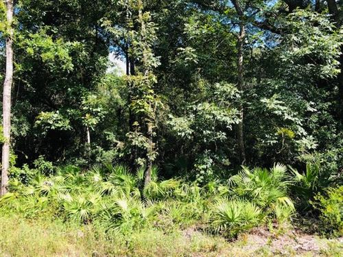 2.5 Acres 778670 : Chiefland : Levy County : Florida