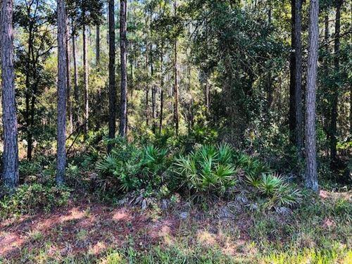 1.04 Acres 778660 : Bronson : Levy County : Florida