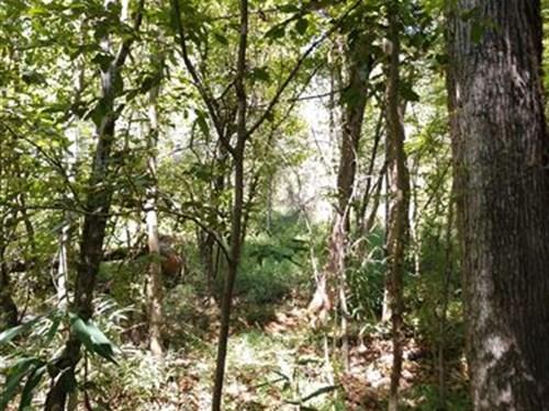 Homesite B/N Gray & Macon : Macon : Jones County : Georgia