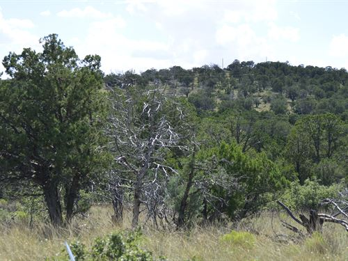 Looking For Mountain Views, $199/Mo : Timberon : Otero County : New Mexico