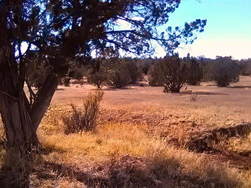 Mature Trees & Road Access, $145/Mo : Seligman : Yavapai County : Arizona