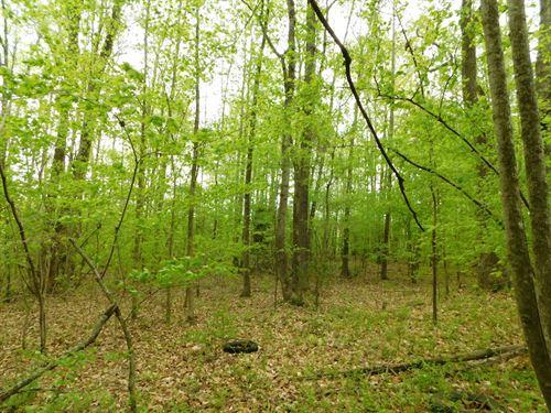 Tillery Pines Lot 9 : Tillery : Halifax County : North Carolina