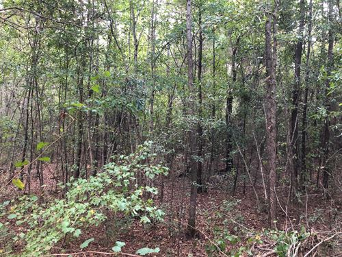 6.72+- Acre Wooded Tract 3-Bartow : Taylorsville : Bartow County : Georgia
