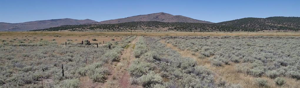 Madeline Valley Hemp Kingdom : Madeline : Lassen County : California