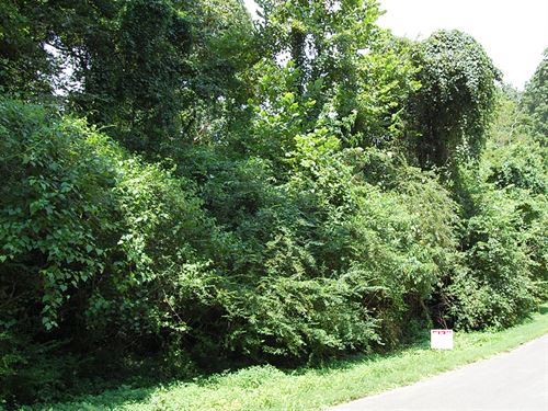 .34 Acre Lot In Florence : Florence : Lauderdale County : Alabama