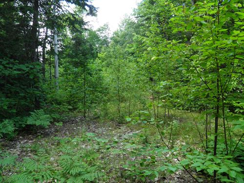 Maine Land For Sale in Patten : Patten : Penobscot County : Maine