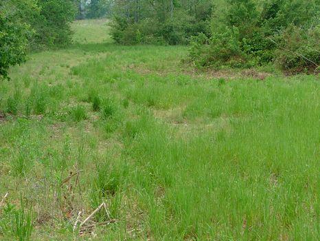 18 Acres in Pisgah : Pisgah : Jackson County : Alabama