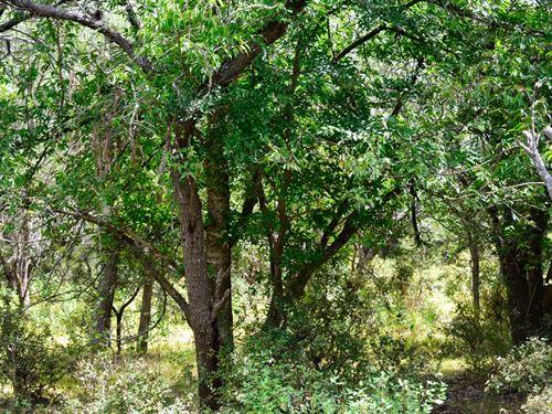 10 Ac Near Austin W/Owner Financing : Lockhart : Caldwell County : Texas