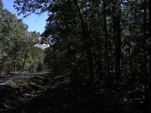 Mixed Timber Land On Blacktop : Norwood : Douglas County : Missouri
