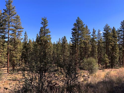 Tall Trees, Great Access, $275/Mo : Bonanza : Klamath County : Oregon