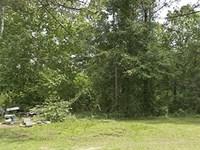 Wooded Lot in Covington La : Covington : Saint Tammany Parish : Louisiana