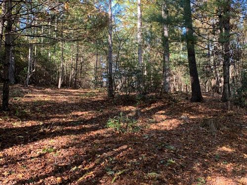 Wooded Lot in Blue Ridge Mountains : Independence : Grayson County : Virginia