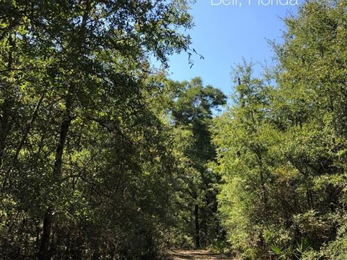 10 Acres, West Gainesville, FL : Bell : Gilchrist County : Florida