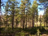 Private Wooded Lot, $185/Month : Chiloquin : Klamath County : Oregon
