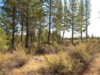 Wooded Corner Lot, $145/Month : Chiloquin : Klamath County : Oregon