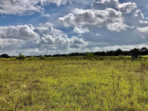 Vacant Land Gilchrist County : Trenton : Gilchrist County : Florida