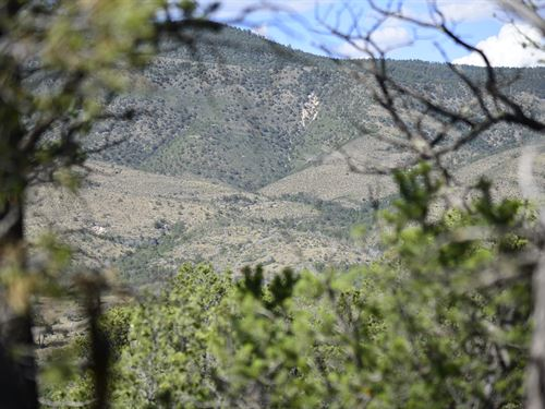 Over An Acre Of Trees Mountain View : Timberon : Otero County : New Mexico