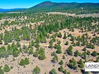 Off Grid Privacy Only $129/Month : Beatty : Klamath County : Oregon