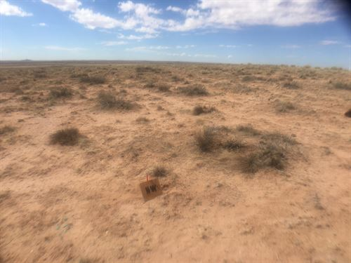Land Near Petrified Forest Park, AZ : Holbrook : Navajo County : Arizona