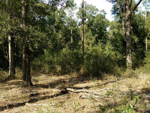 4.26 Acres In Live Oak Florida : Live Oak : Suwannee County : Florida