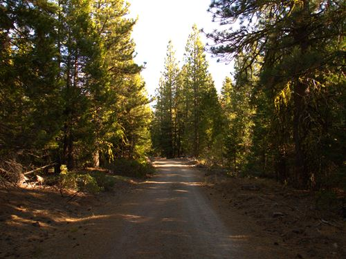 Heavily Wooded Lot, $165/Month : Bonanza : Klamath County : Oregon