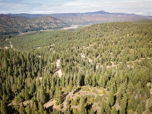 Timbered Building Lot Payette River : Cascade : Valley County : Idaho