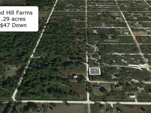 .29 Acre Corner Lot Near Lakes : Avon Park : Highlands County : Florida