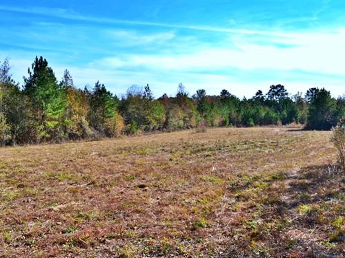 SC Country Acreage : Cheraw : Chesterfield County : South Carolina