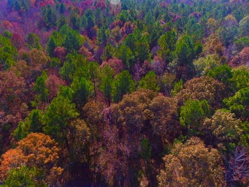 Hunting Land, Timber, Hardwoods : Glenwood : Montgomery County : Arkansas