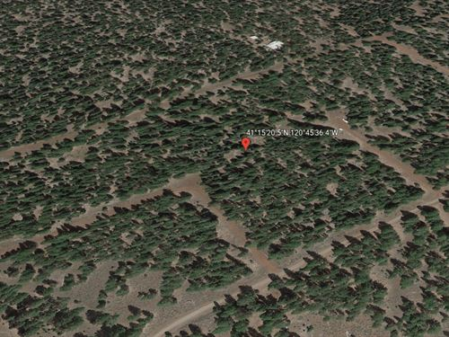 Lot With Gorgeous Trees, No 56 : Alturas : Modoc County : California