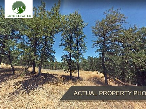 Nice Treed Property in Corning, CA : Corning : Tehama County : California