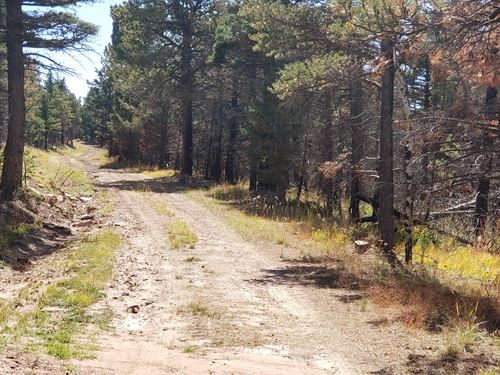2.20 Acres Wooded With Power Nearby : Fort Garland : Costilla County : Colorado