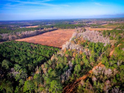Perfect 3 Acre Homesite : Ludowici : Long County : Georgia