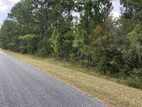 3-Acre Homesite on S Forest Dr : Jesup : Wayne County : Georgia