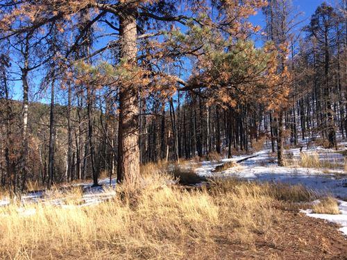 Enjoy Hunting Camping & Adventure : Fort Garland : Costilla County : Colorado