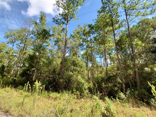 Residential Lot in Rural Setting : Citra : Marion County : Florida