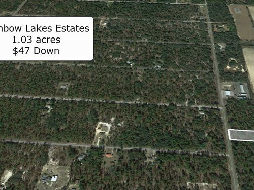 Oversized 1.03 Acre Lot : Dunnellon : Marion County : Florida